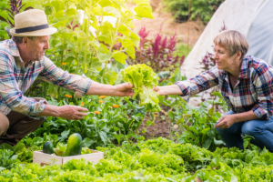 Heart Health and Leafy Greens: What's Nitrate Got to do With It?